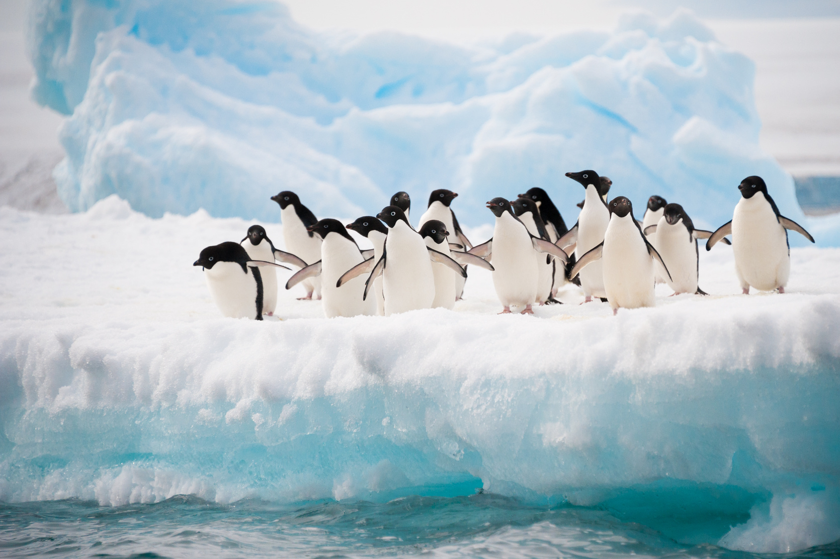 Penguins, Antarctica, cold climate trend