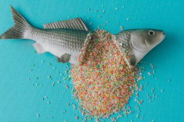Food trends sugar sculpture