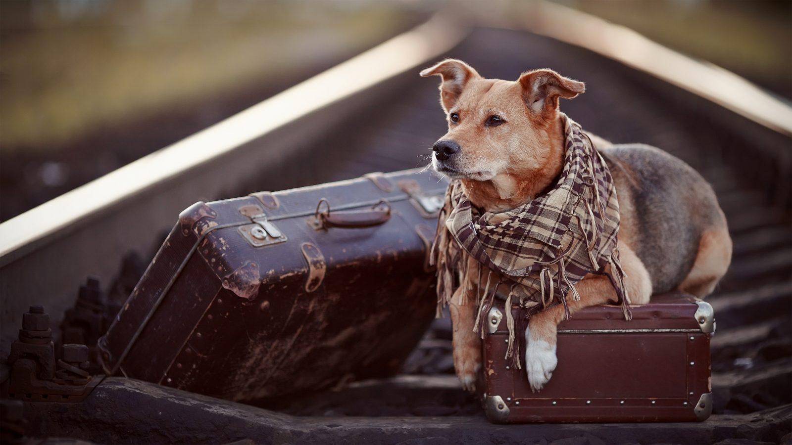 More Pet Owners Plan To Take Their Dog On Holiday This Year