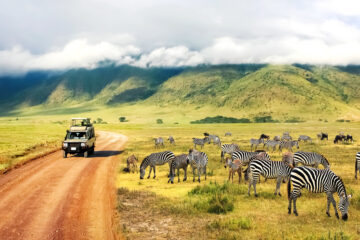 Safari in Africa with zebra