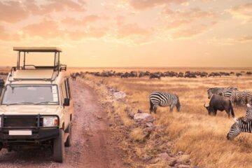 Game drive on the Serengeti