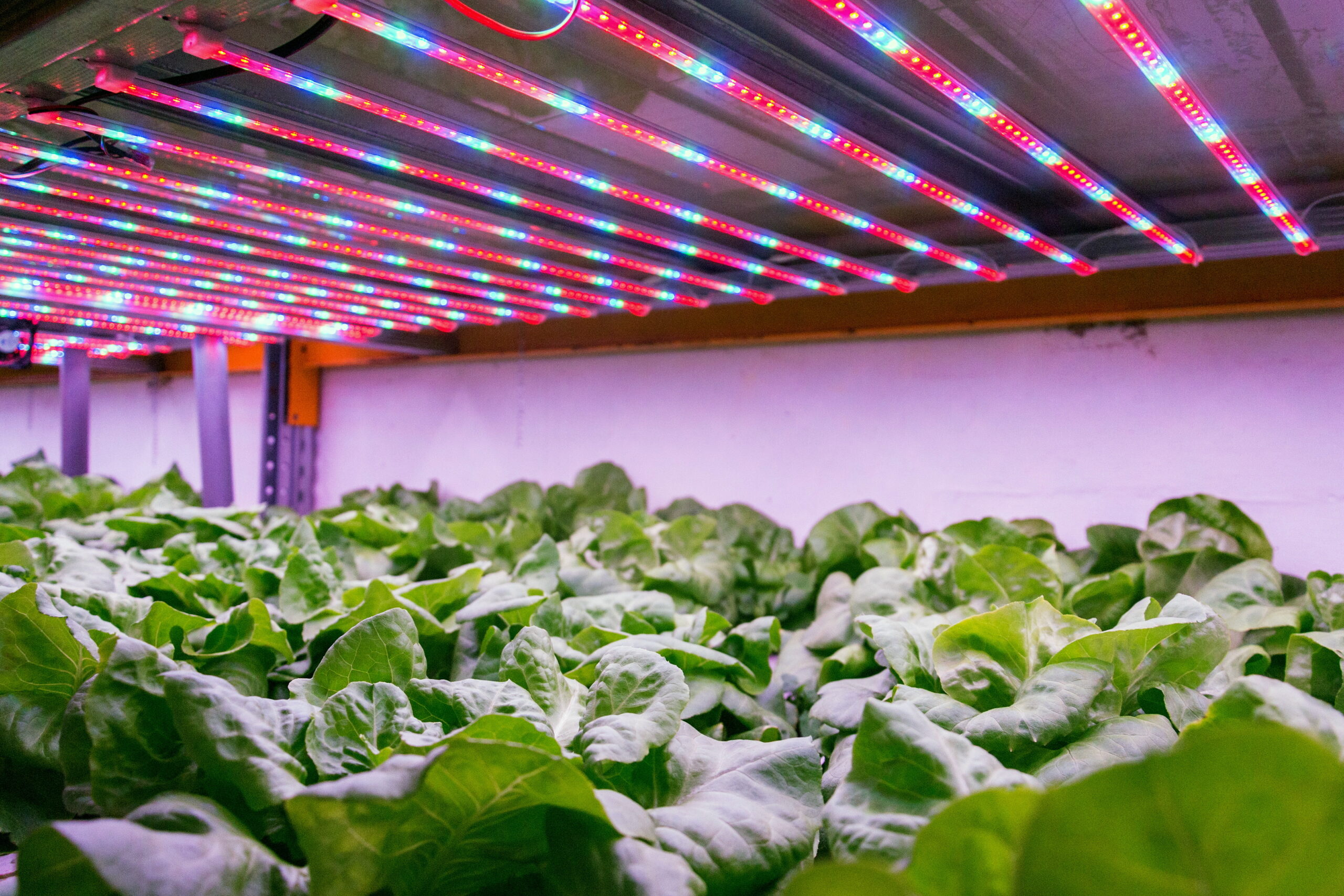 Vertical salad farm
