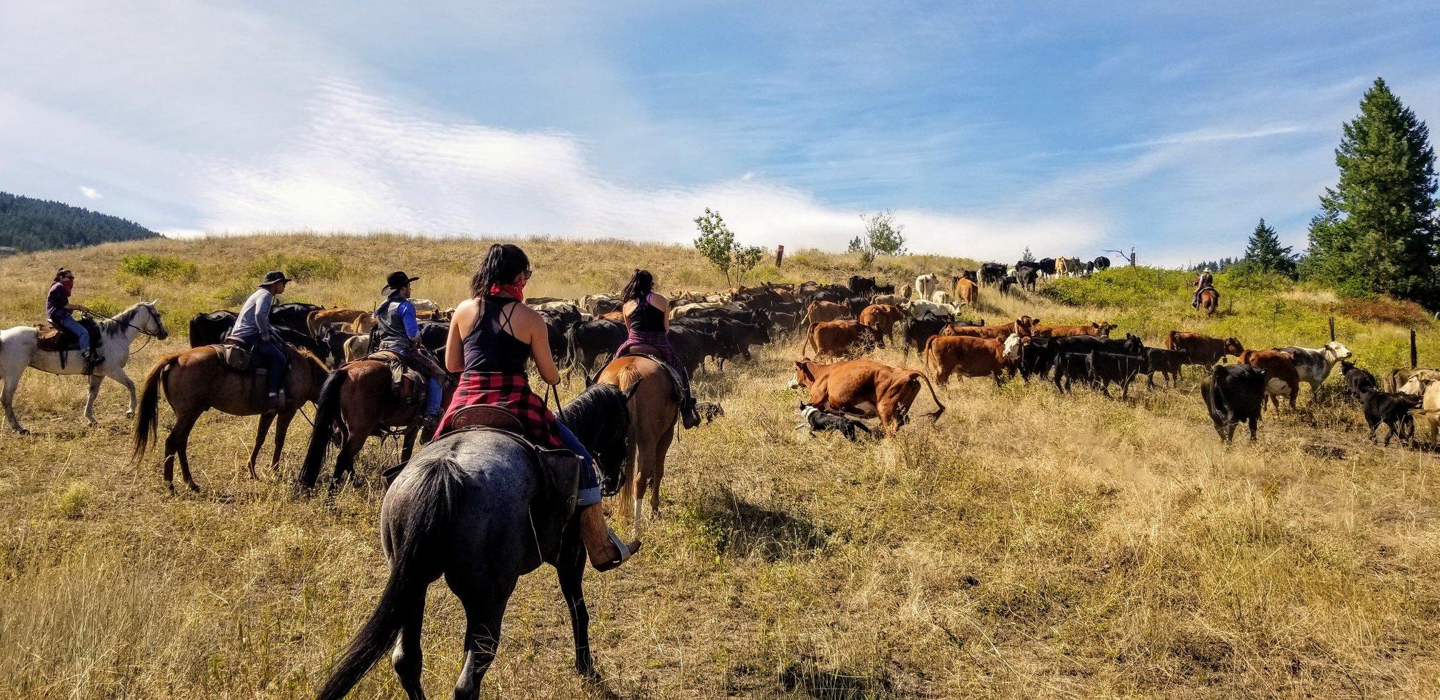 Bull Hill Ranch Kettle Falls