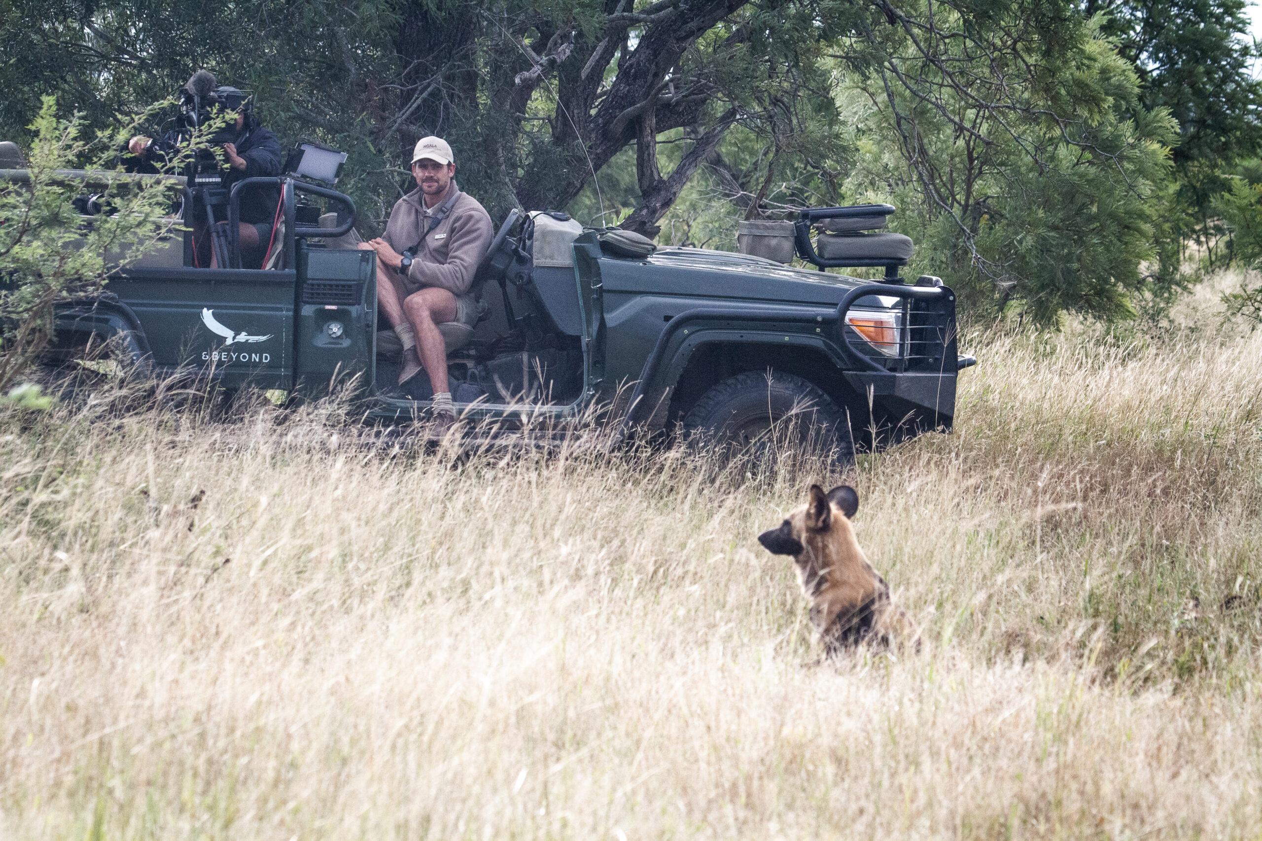 andBeyond private virtual safari hyena