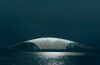 The Whale © Dorte Mandrup, The Whale and Mir