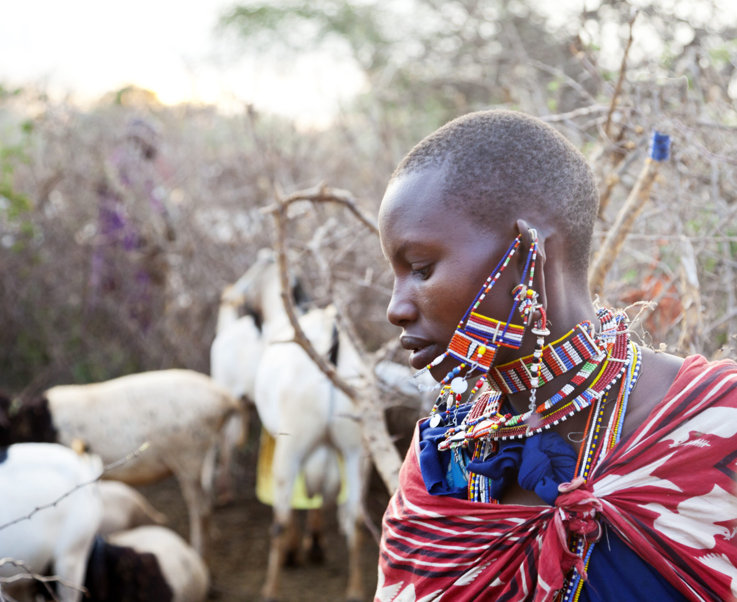 Maasai woman with goats.