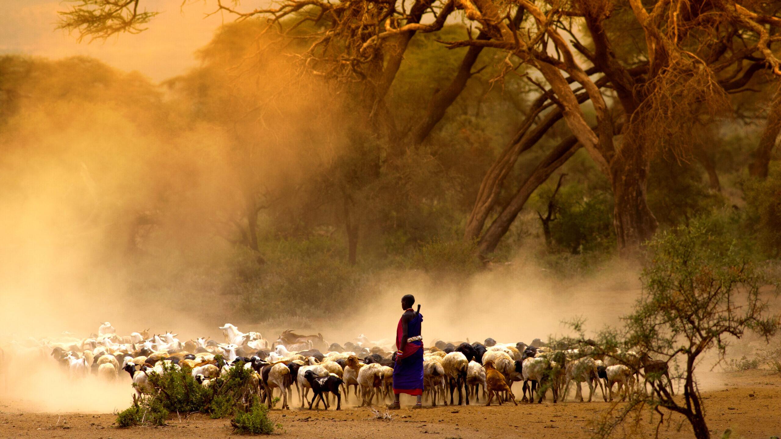 Adumu Safaris Maasai pastoralism