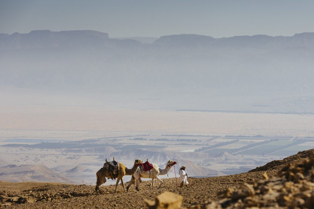 Seffi Experience Manager and Camels; Six Senses Shaharut